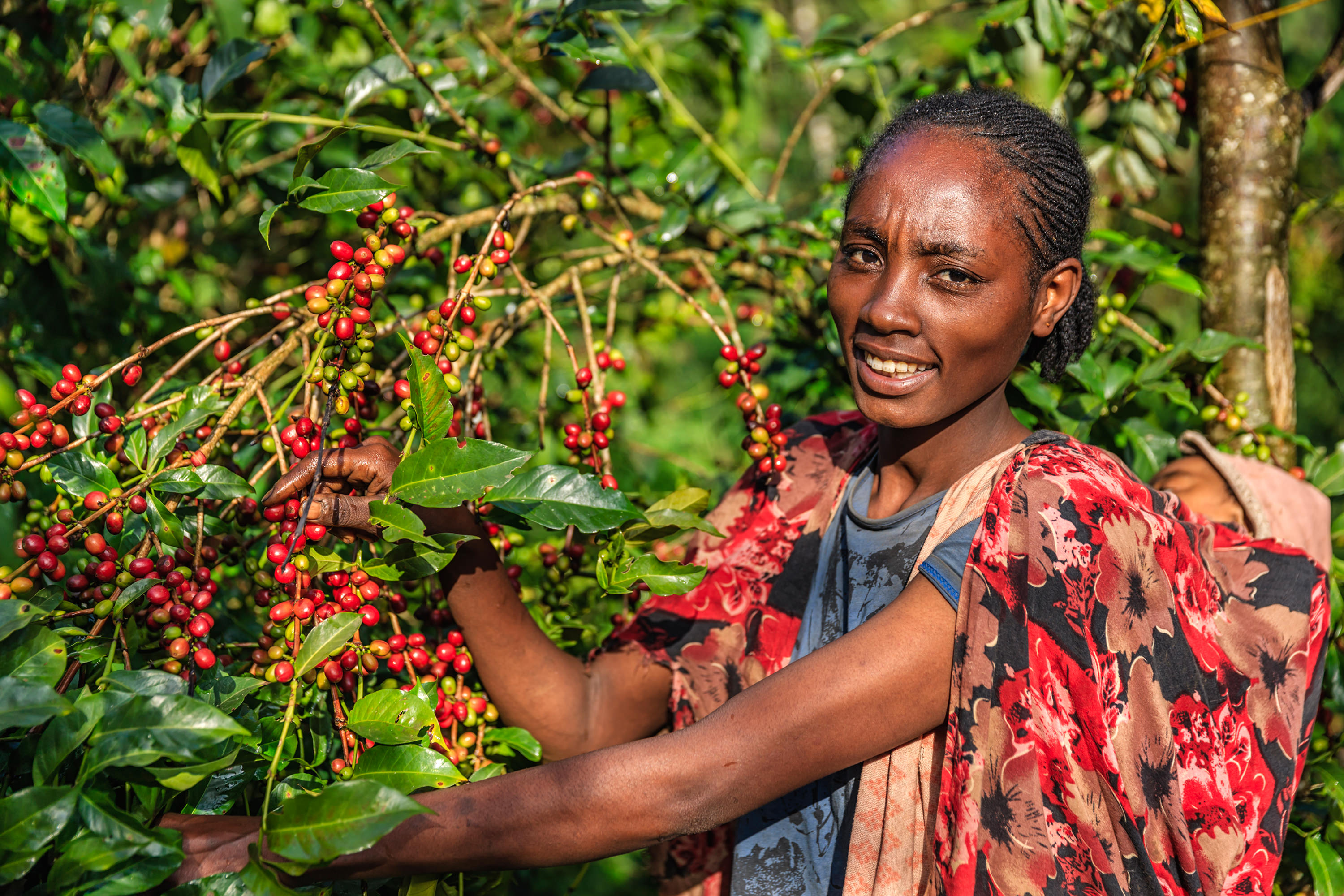 Fairtrade, Labour Markets and Women's Economic Empowerment in Ethiopia